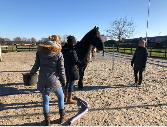 Opleiding Paardencoach 2Tango Veghel - Praktijk foto