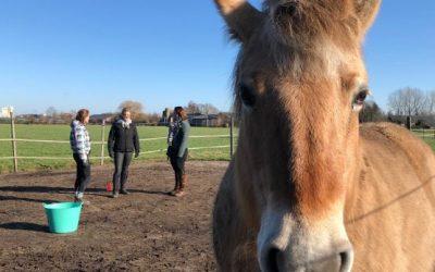 Paarden in therapie