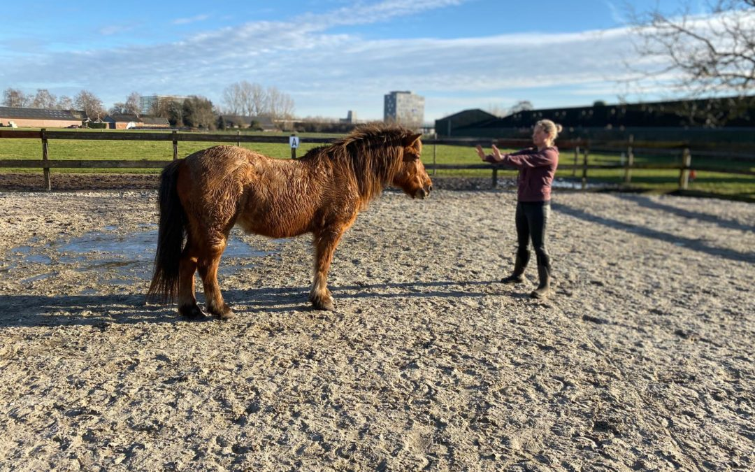 Paard stop | Burn out therapie